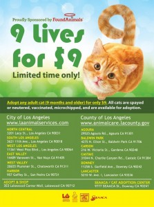 adopt cats kittens save a life los angeles shelters pet adoption